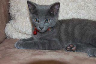 Kitty-018