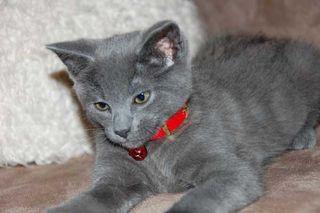 Kitty-028